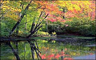 fall trees by a river